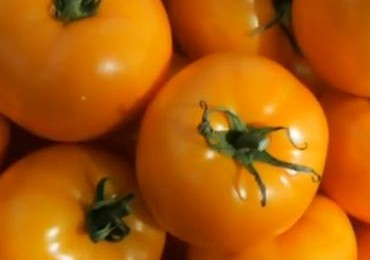 Tomātu audzētāji nonākuši konfliktā ar VAAD pārstāvjiem