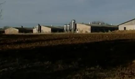 Gailīšu pagastā cūku ferma gadiem piesārņo vidi