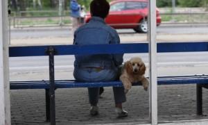 iedzivotaji mugura suns