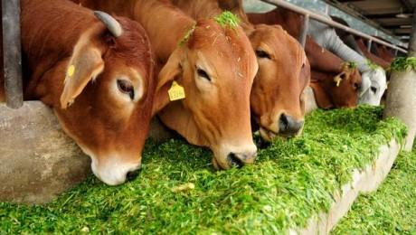 Lauksaimnieki par ģimenes saimniecību iespējām