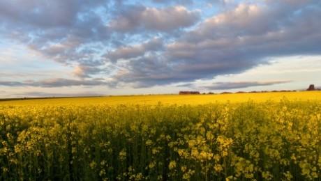 """Zemgales zemnieki raizējas par """"zaļināšanas likumu"""""""