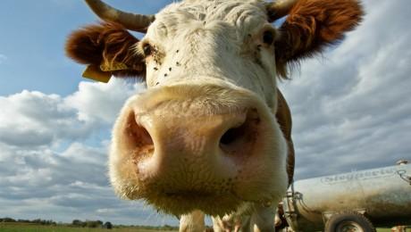 Piensaimnieki izjūt grūtības