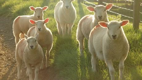 Pusotra miljona eiro aitas gaļas reklāmai