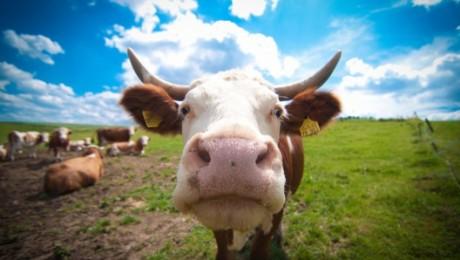 Eiropa lems par atbalstu piena ražotājiem
