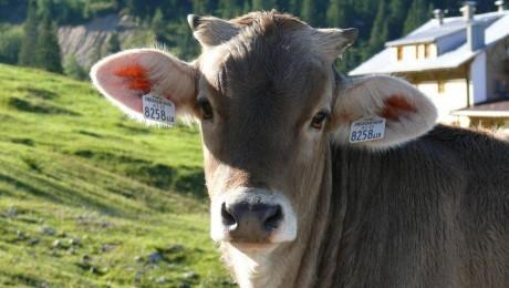 """""""Straupe"""" spēj noturēt piena iepirkuma cenu"""