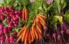 Farmers-Market-Vegetable-rjp