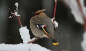 bird-1014238_1280