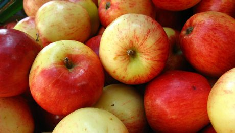 Dārzos daudz ābolu un daudz kaitēkļu