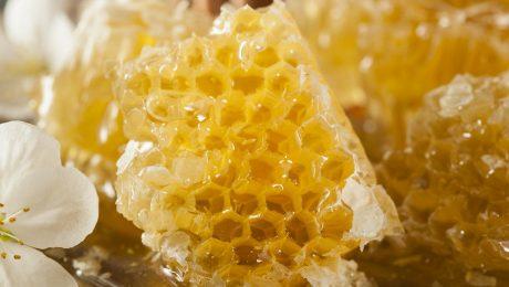 Garšīgākais medus šogad Auces novadā