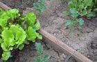 Kā apkarot kukaiņus, nezāles un augu slimības dārzā?