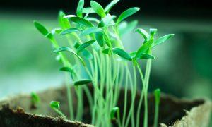 Noderīgi padomi dārzā, kas atvieglos Tavu un augu dzīvi!