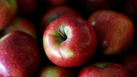 Plāno palielināt ābolu ražošanas apjomu