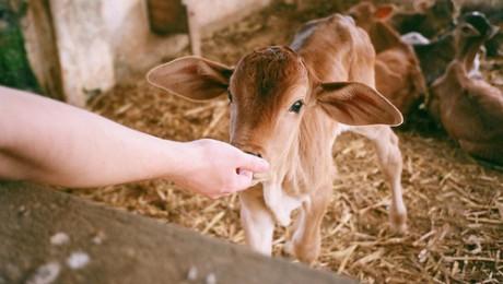 Piena produktus eksportēs uz Ķīnu
