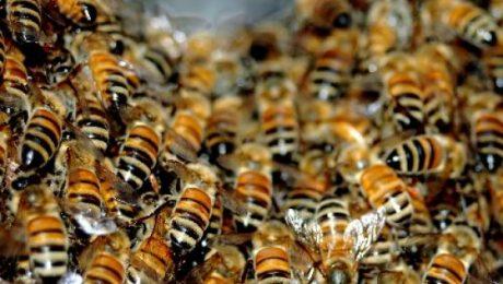 Laika apstākļu ietekme uz medus ražu