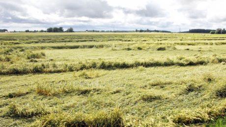 Zemniekus uztrauc lielais mitrums